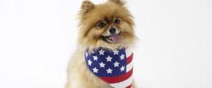 Dog Flag