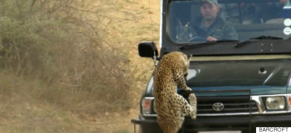 This Leopard Attack And What Happened Next Is Seriously Disturbing