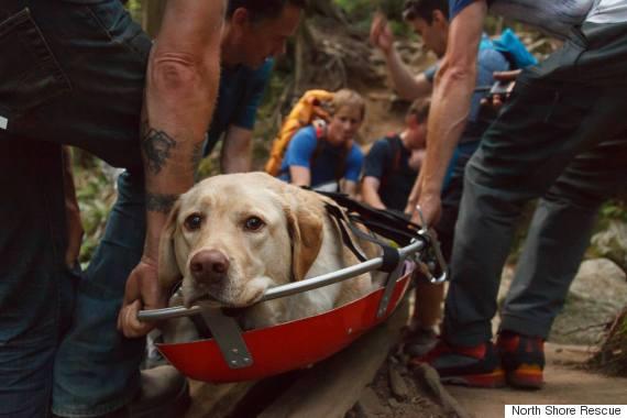 fraser dog rescued
