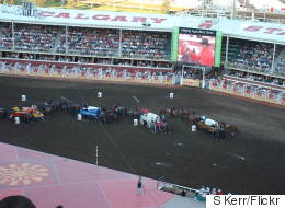 Calgary Stampede Horse Euthanized After Chuckwagon Accident