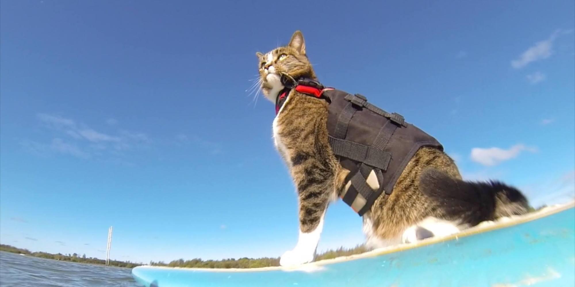 Skateboarding Cat Video