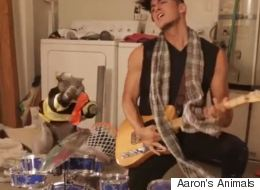 Cat And His Owner Form Rock Band, Are Totally Awesome