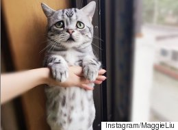 The Saddest Cat On Instagram Will Break Your Heart In The Best Way