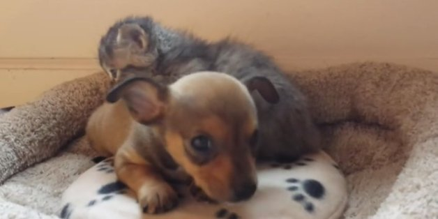 cute puppy videos huffpost