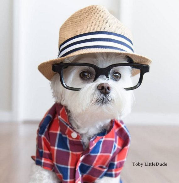 Can Dogs Wear Glasses