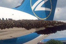 Bees latch on to plane | Pic: Youtube