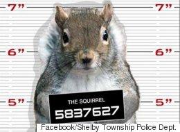 Police Hope Squirrel Mug Shot Helps Nab Nut Thief