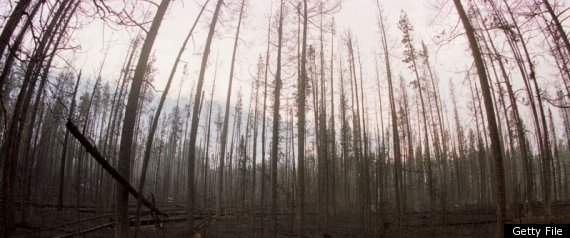CLIMATE CHANGE FIRES