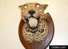 15 Disturbing (And Funny) Examples Of Taxidermy Gone Wrong