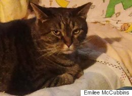 Cat Named Limberbutt McCubbins Enters US Presidential Race (Yes, Really)