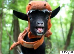 Jurassic World Reenacted By Thespian Troupe Of Nigerian Dwarf Goats