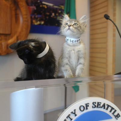 kitty hall