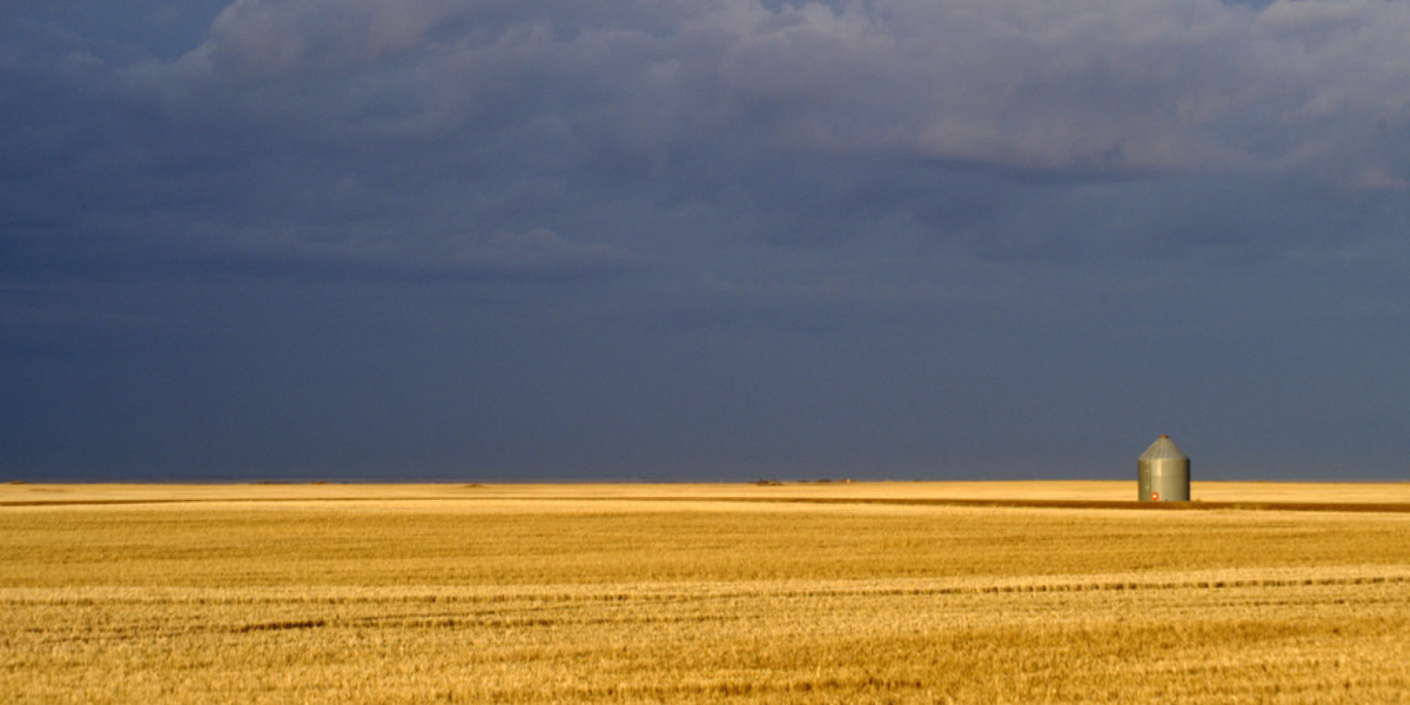 Drought Ridden Saskatchewan Faces Its Worst Harvest In Years