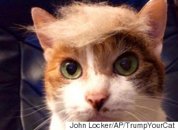 People Are Giving Their Cats Donald Trump Hairstyles And It's Basically Animal Abuse