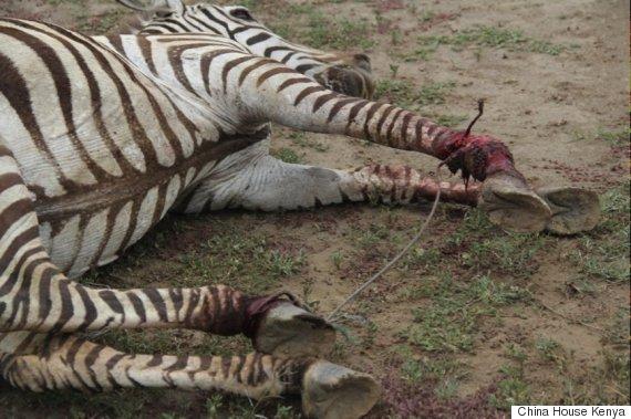 kenya zebra 1