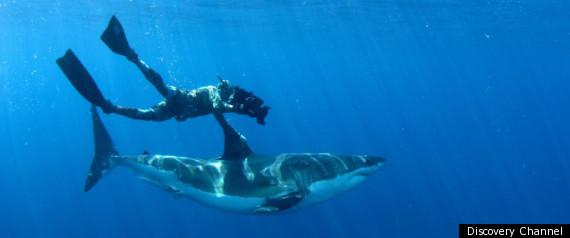 SHARK WEEK 2011