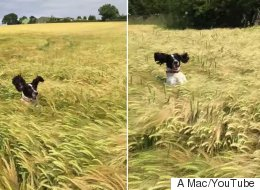 Dog Tries To Find Its Owner In Long Grass, Is Adorable