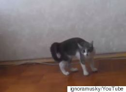 Cat Tries To Look Tough, Fails Spectacularly