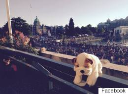 This Stuffie Got Lost At A B.C. Hotel, So Staff Showed Him A Little Love