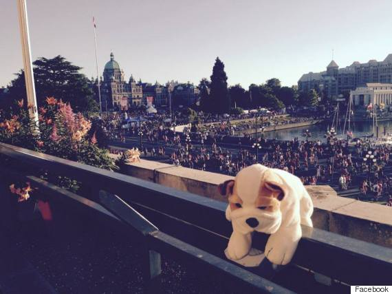 boris stuffed dog victoria bc