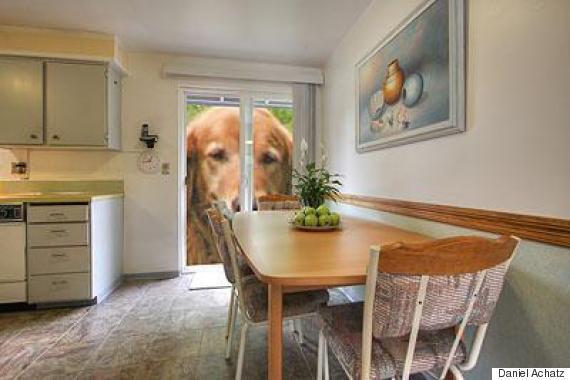 house for sale with dog