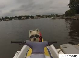 Daredevil Dog Joins Owner for a Jet Ski Ride