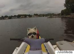 Daredevil Dog Joins Owner for a Jet Ski Ride