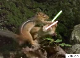 Jedi Chipmunks Have An Epic Battle With Tiny Lightsabers
