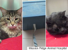 Cats Left Abandoned Inside Duct-Taped Bin