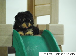 Puppies on Slides (And Other Adventures In The Human World)