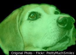 Glow In The Dark Beagle
