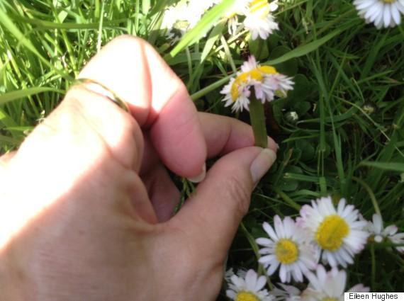 deformed daisy