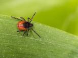 Symptômes, traitements... Tout savoir sur la maladie de Lyme