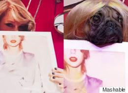 Celebrity Pug Recreates Taylor Swift's Instagram Photos