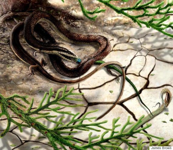 fourlegged snake