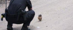 OWL STOPPED SHERIFF