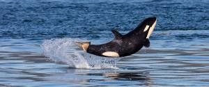 ORCA BEBE FELIZ