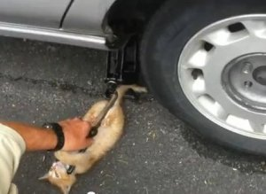 Kitten Helps Change Tire
