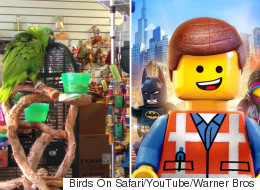Incredible Parrot Sings 'Everything Is Awesome' From The Lego Movie