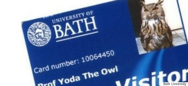 Yoda The Owl Gets His Own Library Card As A Thank You For Scaring Off Seagulls