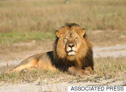 Cecil The Lion Hunter Has An Alberta Connection