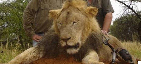 Hear US Gun Magazine Editor Defend Cecil The Lion's Slaughter