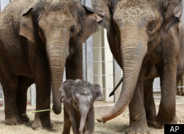 America's First Elephant Sperm Bank Set To Open