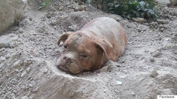 dog buried alive