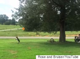 This Dog's Commitment To Keeping A Balloon Off The Ground Is Mesmerising