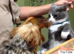 15 Cats Who Are Totally Not Afraid Of Dogs