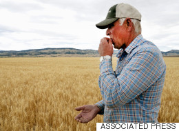 Alberta Ag Minister Won't Declare Drought Emergency Just Yet