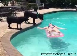 Disfrazó a su perro de tiburón y pagó las consecuencias