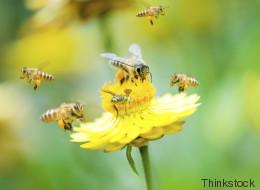 Zehn Gründe, warum Insekten unseren Respekt verdienen