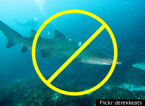 Food tv and cooking channel ban shark meat food blog food network and cooking channel have pulled all recipes with shark meat from their websites and will no longer feature shark on any of their shows forumfinder Choice Image